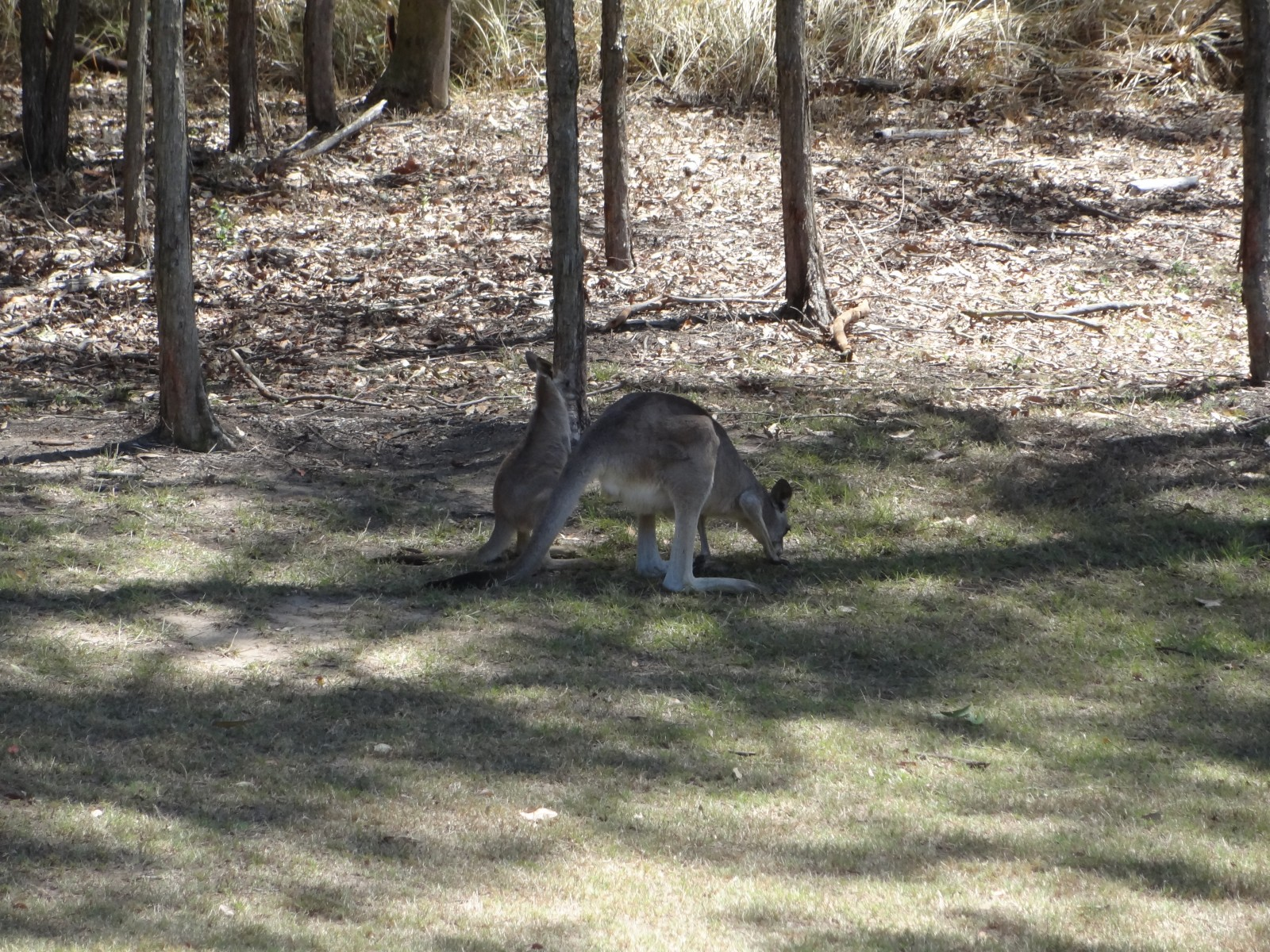 Tierleben im Brookwater Golf Club