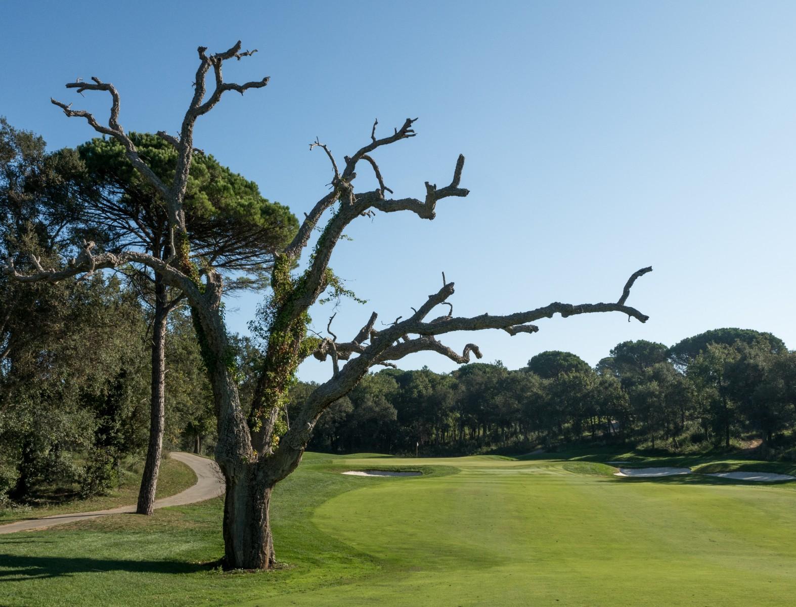 PGA Catalunya Stadium Course: Der Baum von Loch 12